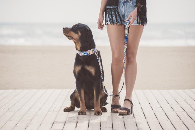 accesorios collar para perros 1