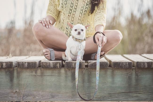 accesorios collar para perros 4