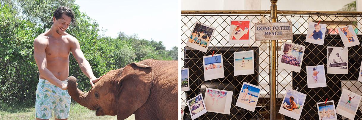 love brand_elephant