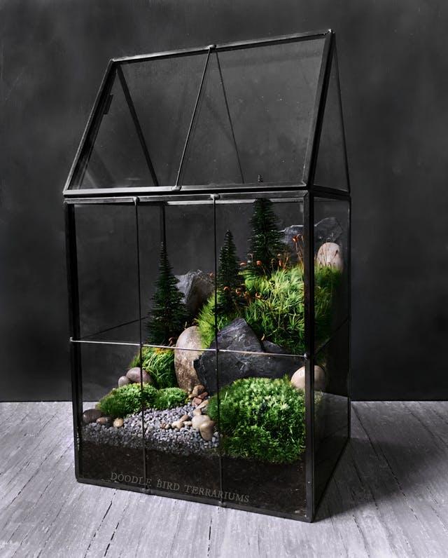 Estas son 5 de las plantas de interior que sobreviven sin - Plantas de interior sin luz ...