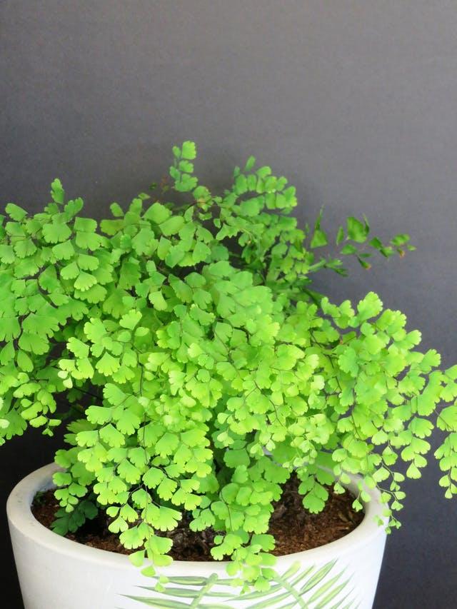 Estas son 5 de las plantas de interior que sobreviven sin for Plantas de interior con poca luz